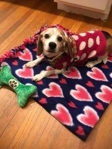 bailey blanket
